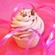 6 x Le Cupcake du Mois